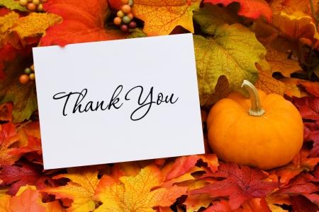 merci: Une carte Merci avec une gourde assis sur un fond de feuilles de chute, merci