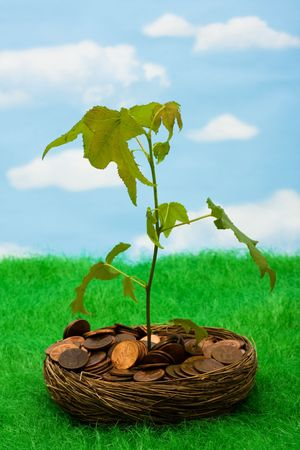 A bowl of pennies that has a tree growing out of it on a sky background, growth in your savings photo