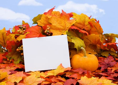 A blank card with a gourd sitting on a fall leaves on a sky background, blank card photo