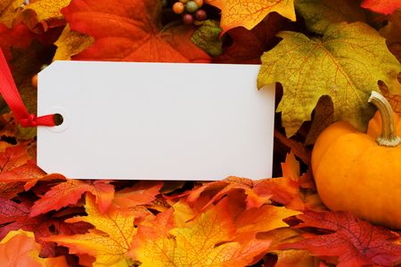 A blank tag with a gourd sitting on a fall leaf background, fall harvest photo