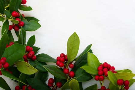 berry: Holly and berries making a border on a white fur background, Christmas holly border Stock Photo