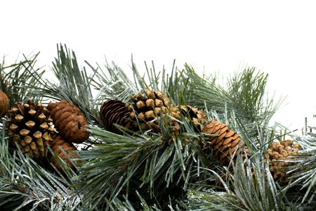 A green garland with pine cones border isolated on a white background