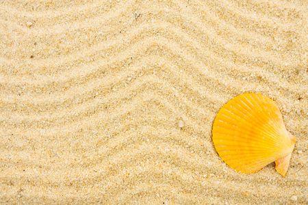 Een zeeschelp op zand met vele getrokken lijnen daarin, strandachtergrond Stockfoto