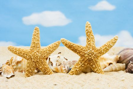 Veel schelpen zitten in het zand, zee schelpen Stockfoto