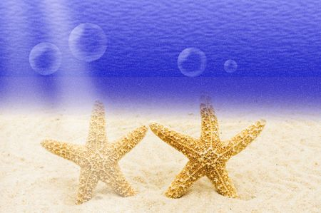 drown: Two starfishes  standing  in the sand underwater, underwater