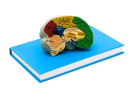 Un cerveau de modèle sur un livre isolé sur un fond blanc, étudier Banque d'images - 7189332