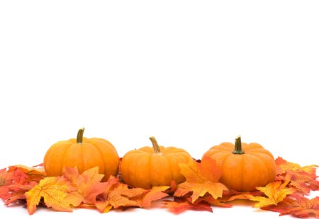 fall leaves on white: Fall leaves with a pumpkin border at the bottom, autumn background