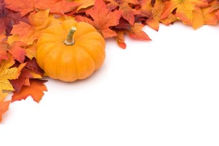citrouille: Chute des feuilles avec une citrouille au sommet isol� sur blanc, fond automne