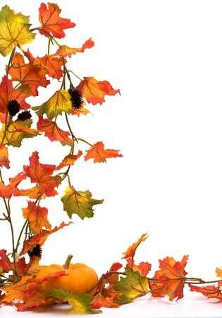fall leaves border: Pumpkin with fall leaves isolated on white, Autumn scene