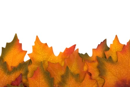 Fall leaves isolated on white at the bottom border, Autumn border Stock Photo - 7988436