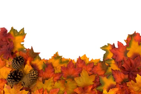Fall leaves and pinecones isolated on a white background, fall border photo