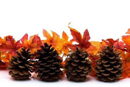 Fall leaves and pinecone isolated on a white background, fall border photo