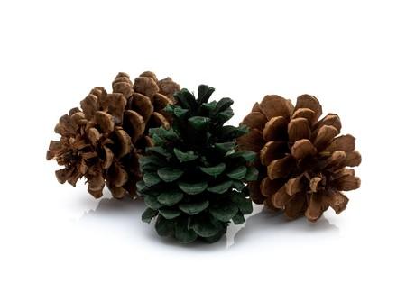 pinecones: Three pinecones isolated on a white background, winter pinecones Stock Photo