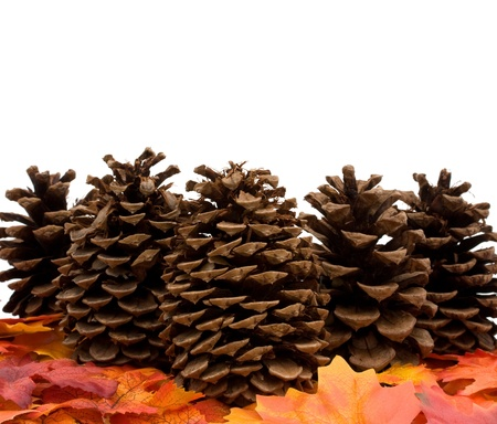 Fall leaves with a pinecones isolated on a white background, fall leaves border photo