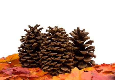 Fall leaves with a pinecones isolated on a white background, fall leaves border Stock Photo - 8249726