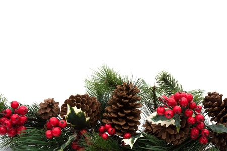 Pine cones and holly berries on bough with white background, winter  border