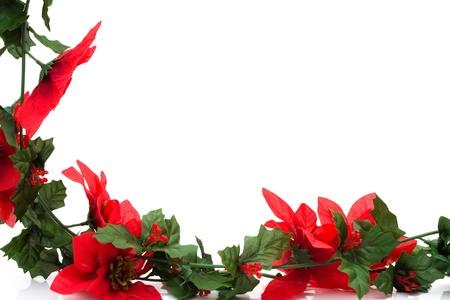 Poinsettia flowers making a border with white background, Christmas border photo