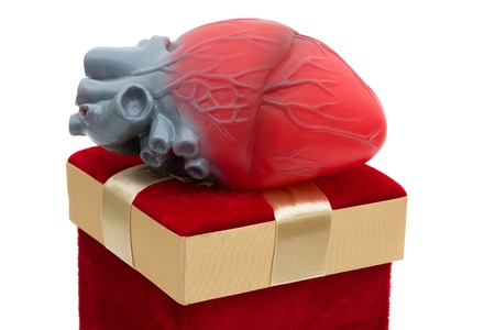 organ donation: A red velvet present with model heart, Giving the gift of life