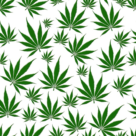 A bunch of  marijuana leaves isolated on a white  background that is seamless