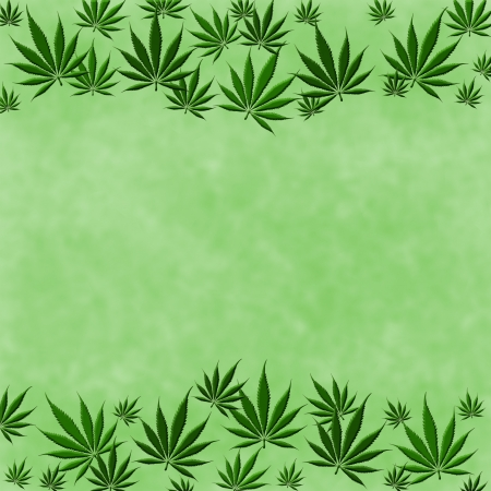 A bunch of  marijuana leaves on a green  background photo