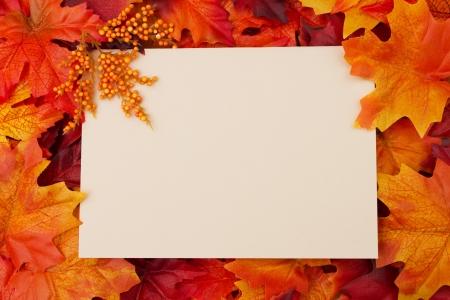accion de gracias: Tarjeta en blanco con hojas de oto�o para su mensaje o invitaci�n