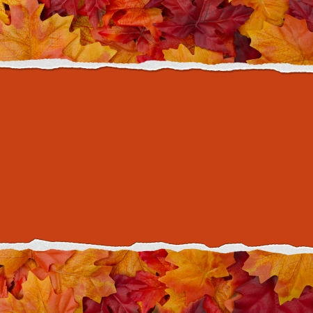 Autumn Leaves Torn  Background for your message or invitation with copy-space in the middle photo