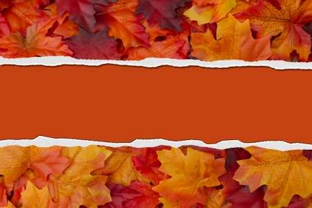 Autumn Leaves Torn  Background for your message or invitation with copy-space in the middle Stock Photo