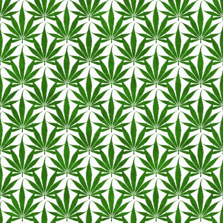 Green Marijuana Leaf Pattern Repeat Background that is seamless and repeats photo