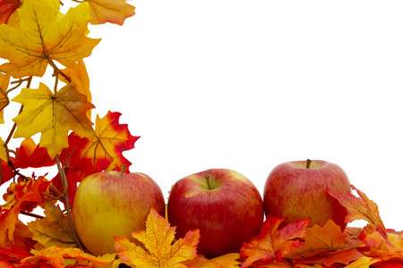 Colorful Fall Border, Three apples on fall leaves isolated on white