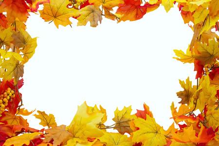 hojas parra: Hojas de otoño de fondo, las hojas de otoño aislado en blanco con espacio para su mensaje