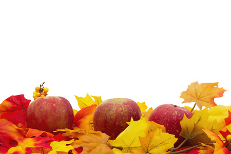 overwhite: Autumn Time Background, Autumn Leaves and Apples isolated on white with space for your message Stock Photo