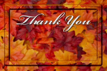 caes: Thank You Fall Season Background, Fall Leaves Background with Frame and text Thank You with copy-space Foto de archivo