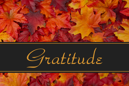Gratitude Message, Fall Leaves Background and text Gratitude