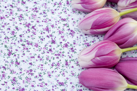 material flower: Spring Time Background, Some tulips on purple flowered fabric with copy space for your message