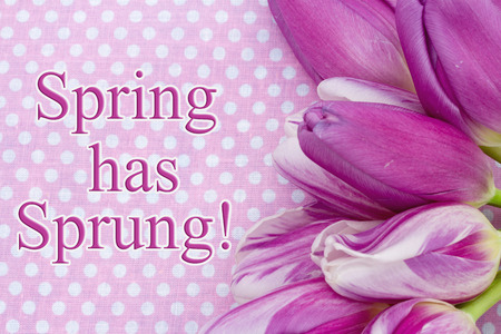 sprung: Spring has Sprung Greeting, Some tulips with pink polka dots and text Spring is Here! Stock Photo
