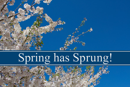 sprung: Spring has Sprung Message, A tree in full bloom with blue sky and text Spring has Sprung Stock Photo