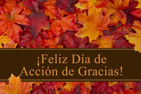 Some fall leaves with text Feliz Dia de Accion de Gracias Imagens