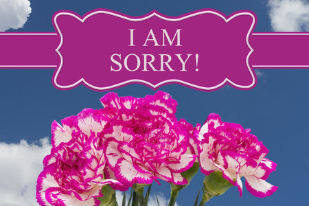 i am sorry: I am Sorry message with a Pink and White Peony Bouquet with a sky background Stock Photo