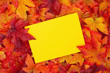 blank spaces: Some fall leaves with a blank yellow greeting card with copy-space for message Stock Photo