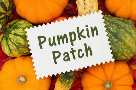 Some fall leaves and pumpkins and gourds with card with text Pumpkin Patch Stock Photo