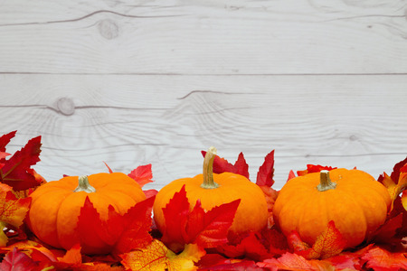 Some fall leaves with pumpkins on weathered wood with copy space for your message