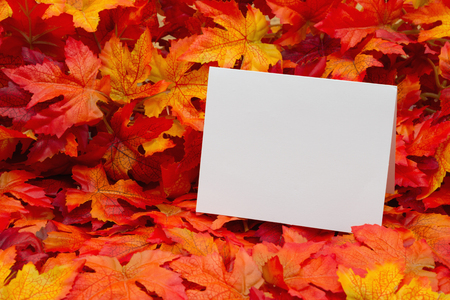 blank spaces: Fall Season Greeting , Some fall leaves with a blank greeting card with copy-space for your message