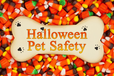 Halloween Pet Safety message on wood dog bone with candy corn background Stock Photo