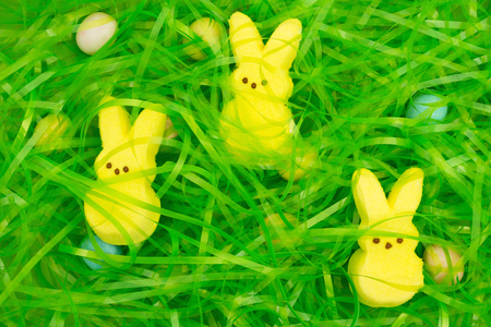 Easter grass with hidden eggs and bunnies background for your Easter holiday message