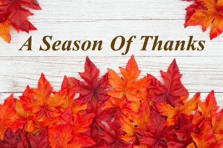 A season of Thanks greeting with red and orange fall leaves on weathered whitewash wood textured Stock Photo
