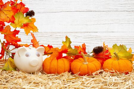 Fall savings with piggy bank and pumpkins and fall leaves on straw hay with weathered whitewashed wood with copy space for your message