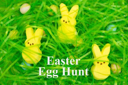Easter egg hunt with Easter green grass with hidden eggs and bunnies for the holiday