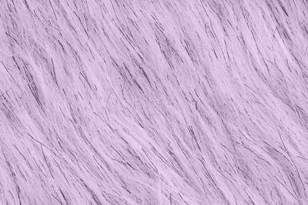 Purple fake fur textured material background with copy space for message or use as a texture Stock Photo
