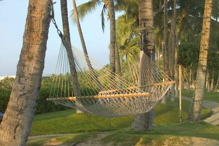 Empty hammock slung between palm trees