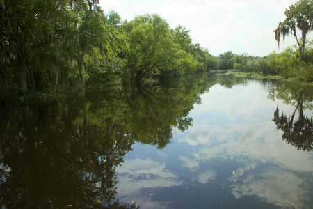 Reflections in the Louisiana swamp photo